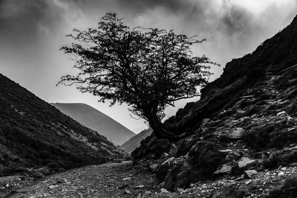 Hawthorn by LensArt