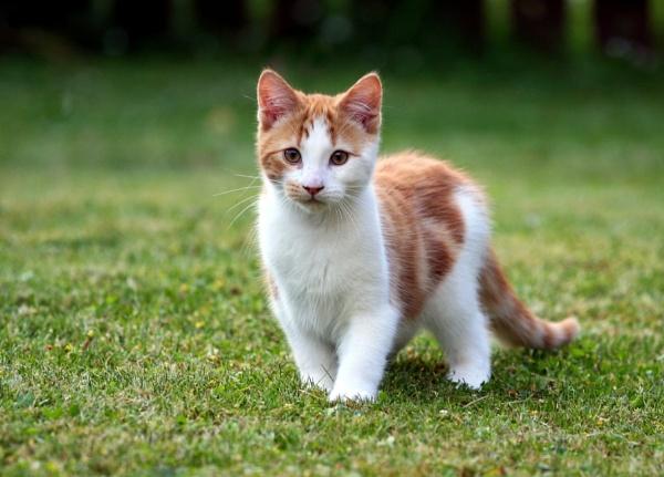 Kitten by dwright