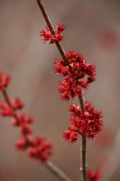 Spring Is Coming by Merlin_k