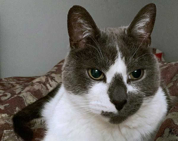 Puddy cat by Merlin_k