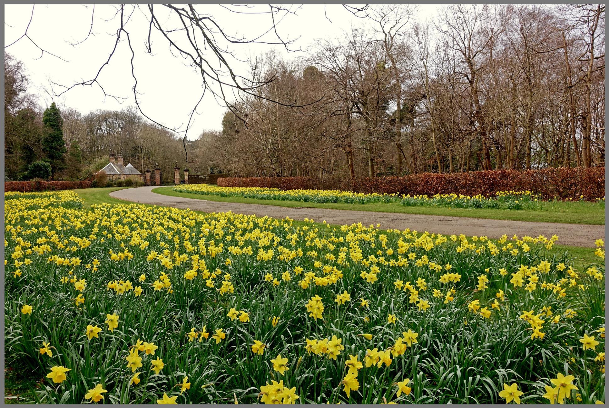 """Pollok Country Park in Spring"""