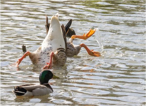 Bottom Over Beak by capto