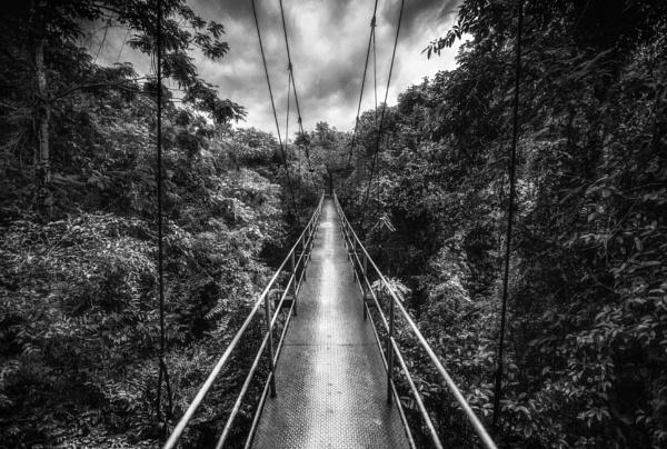 Jungle Tree Walk by Legend147
