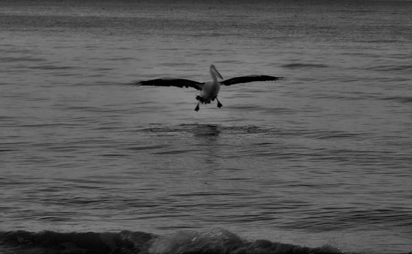glide by Renmurr