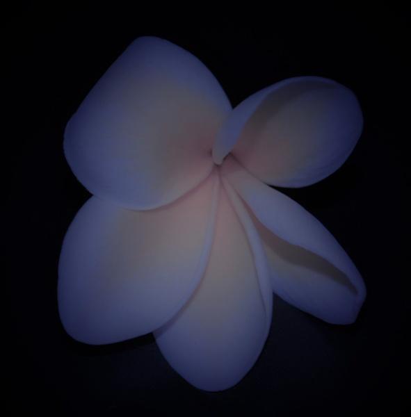 light purple by Renmurr