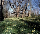 Spring at Last !