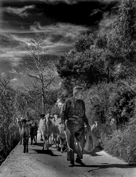 Maltese Shepherd in Chadwick Lakes --- Malta by Edcat55
