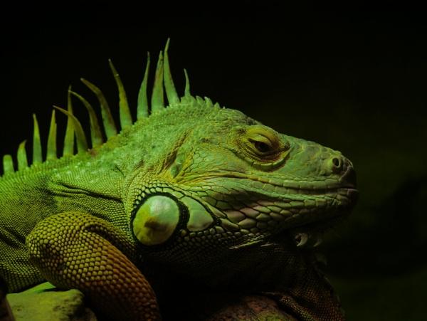 green monster by elousteve