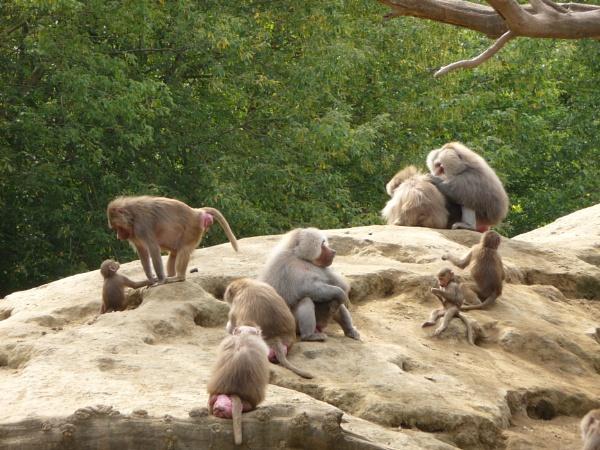 world of monkeys by elousteve