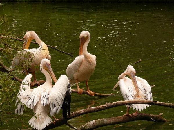water bird by elousteve