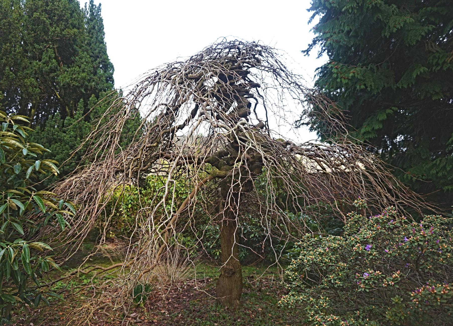 Japanese tree section @ Stirling Uni, Scotland.