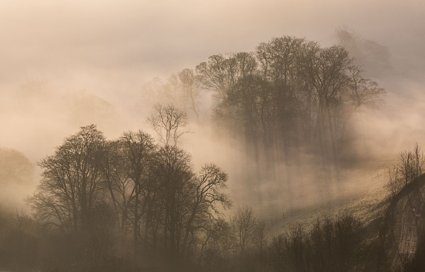 Shadows in the Mist by martin.w