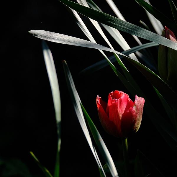 First Bloom by photographerjoe