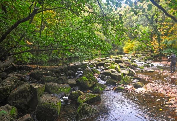 Fingle Glen by Grumby