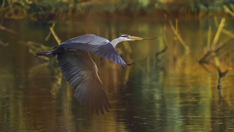 Tecno Heron
