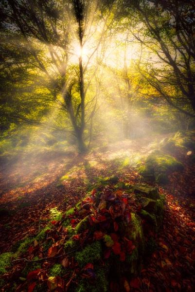 Woodland Mood by douglasR