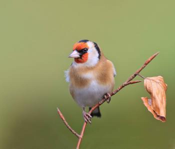 Goldfinch Garden