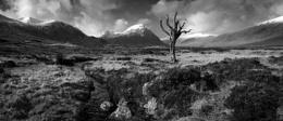 Dead tree Rannoch moor