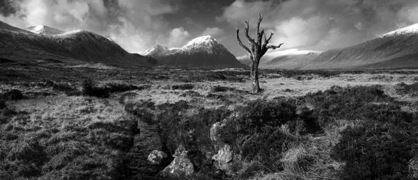 Dead tree Rannoch moor by teepee