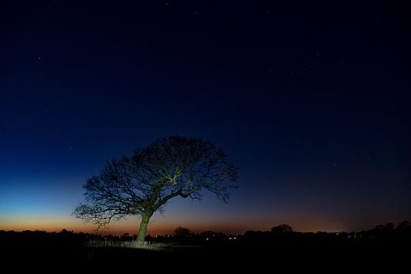 Lone Tree Night Sky by DJLeroy