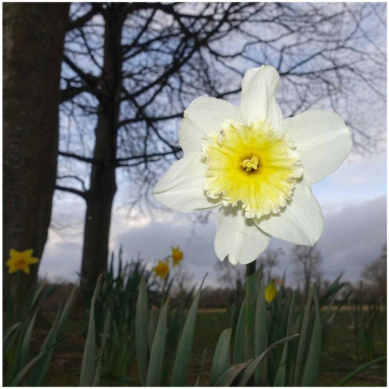 """""""Narcissus"""""""