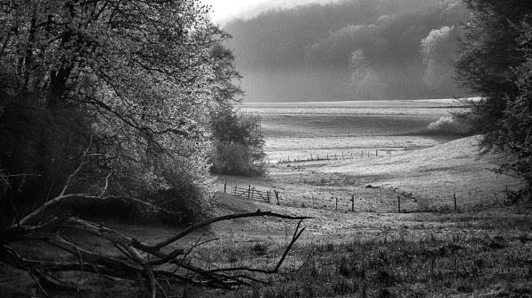 Fields of spring by mlseawell