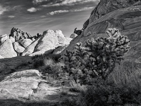 Desert Tree by mlseawell