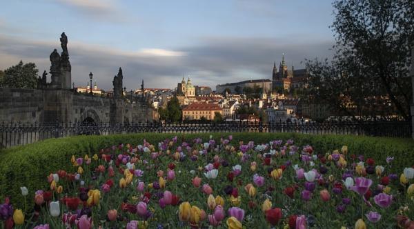 Prague Tulips by philhomer