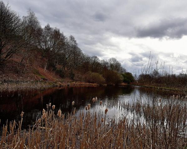 reed  on   dark  water by oldham