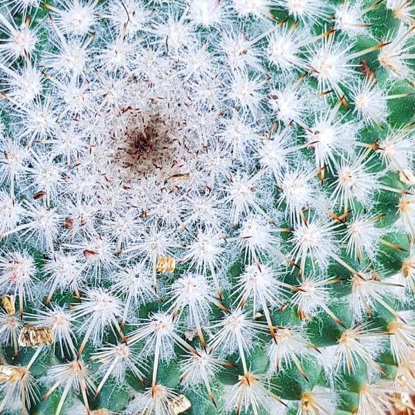 Cactus macro by mohikan22