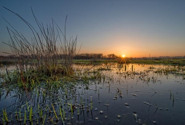 Marshland Dawn by carper123