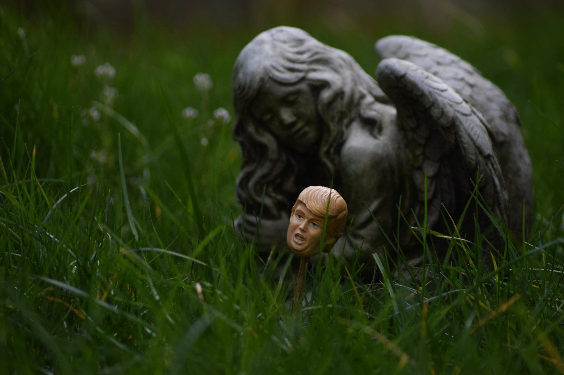 The unkempt lawn