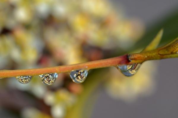 Flowers in a water drop by deavilin