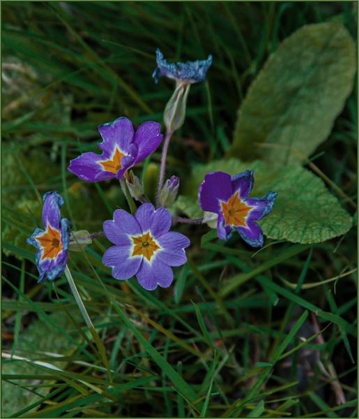 meadow cluster... by estonian