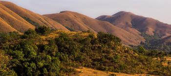 Golden hills...