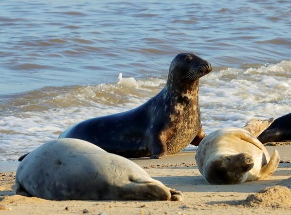 Seal by Oldstoat