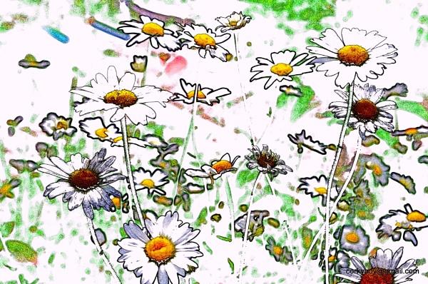 Wild flowers by rustyshackleford