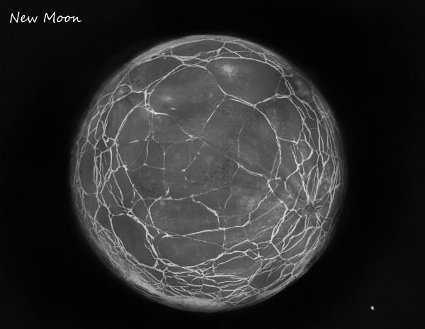 New Moon by C_Daniels