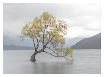 The Wanaka Tree at dusk