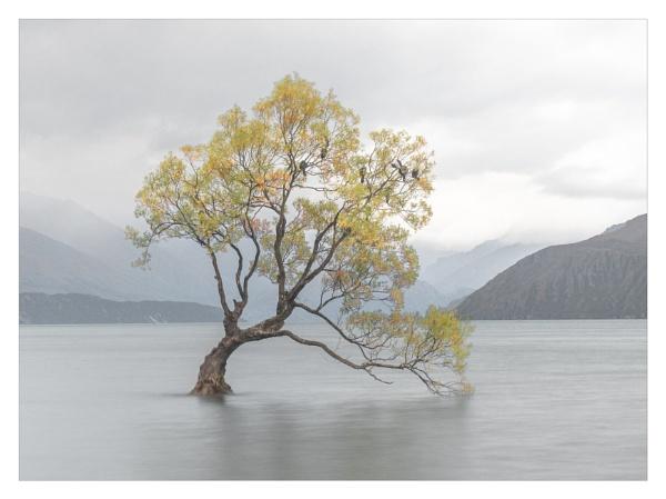 The Wanaka Tree at dusk by suemart