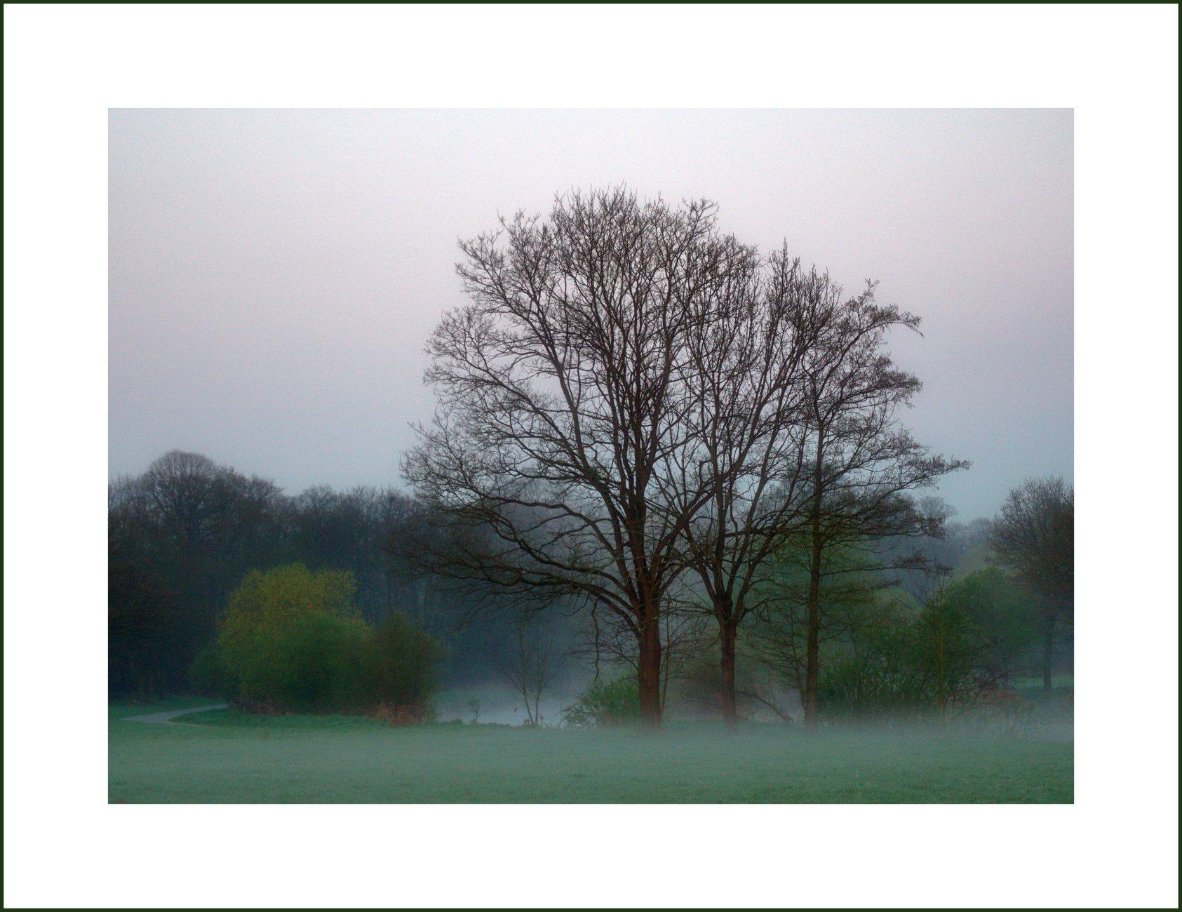 Morning At The River - 3