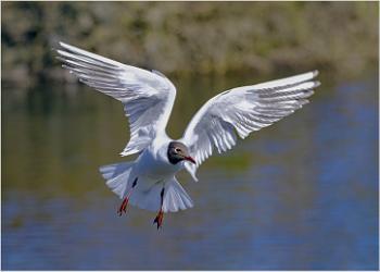 A Left Tern