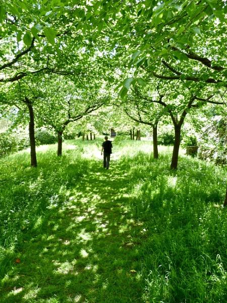 Green Peace. by Debmercury