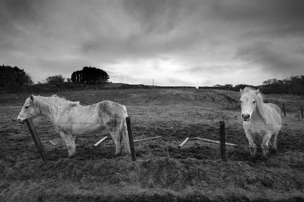 Horses, Mull by AndrewAlbert