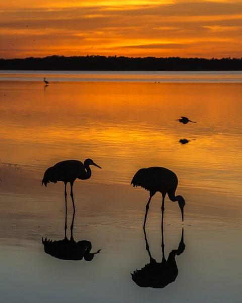 Feeding at sunset by jbsaladino