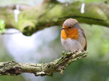 They say when a Robin appears love ones are nearby