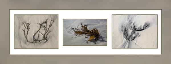 Seaweed Triptych by Irishkate
