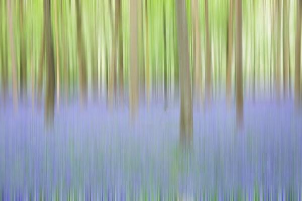 Spring ICM by trusth