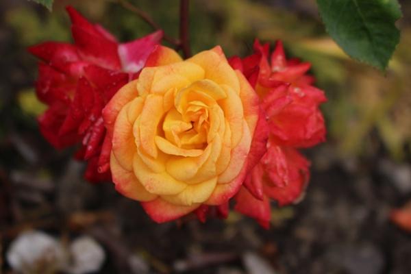 Flower by carol01