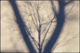 easterweek tree